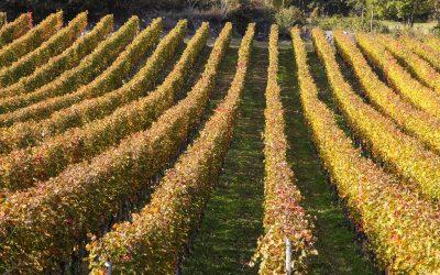 Consultazione pubblica sulle scelte strategiche per il futuro dell'agricoltura in Valle d'Aosta